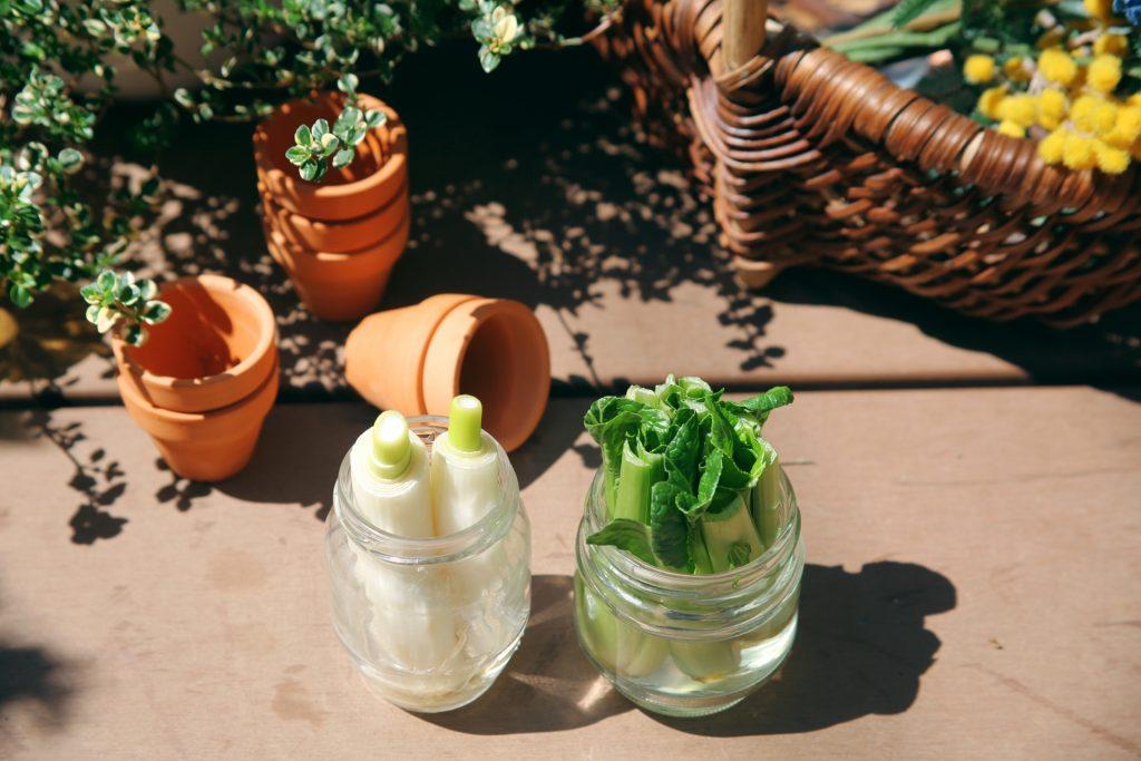 リボべジ,再生野菜,ガーデンキッチン,ガーデン菜園